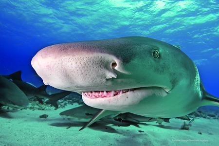 Prejuicio hacia los tiburones