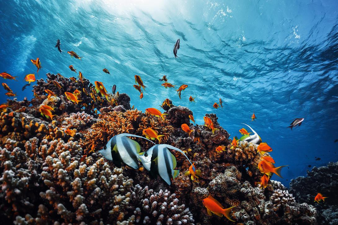 El buceo y tu responsabilidad con el medio ambiente