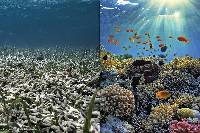 El blanqueamiento del coral