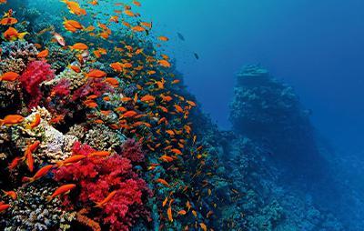 Aprender a bucear, la adaptación al medio subacuático
