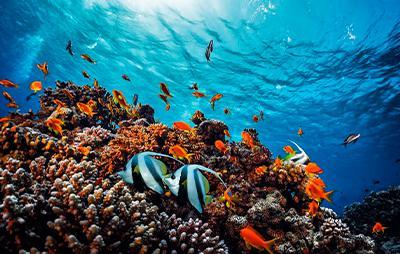 Aprender a bucear, el océano