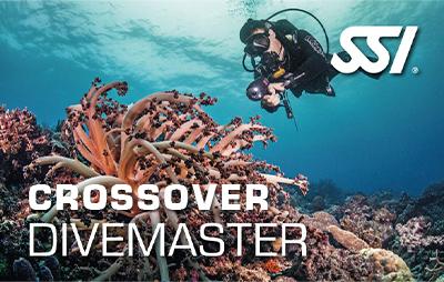 CrossOver para Divemaster online